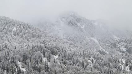 die Alpen-Wälder im Schnee