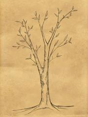 Branch Tree Sketch on Paper