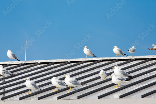 White and Grey Seagulls on Grey Roof