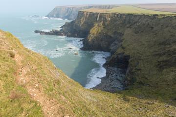 Seals Mutton Cove near Godrevy Cornwall coast England UK