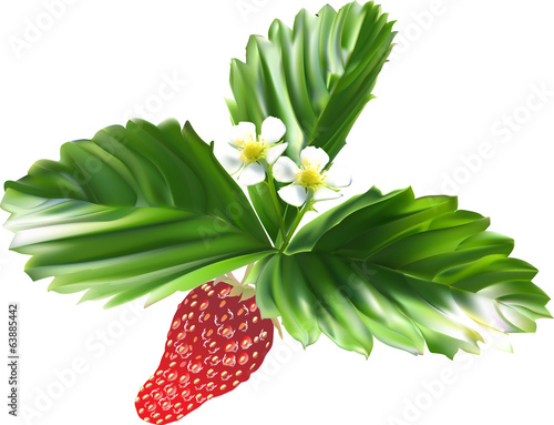strawberry with green leaves and flowers