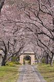 桜のアーチ - 63887275