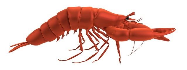 realistic 3d render of lobster