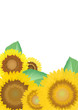 向日葵のカード