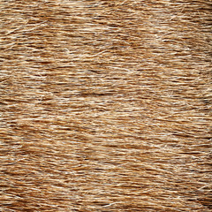 hay, dry grass, dry rice texture background
