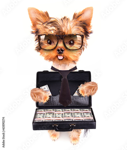 puppy with glasses holding case with money