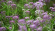 Lilac Flowers on the Defocused Background