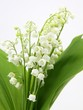 canvas print picture - bouquet de muguet