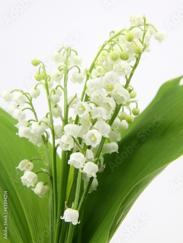 canvas print picture bouquet de muguet