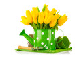 Spring flowers in watering can with garden tools. Isolated on