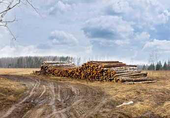 Road to the pile of timber harvesting