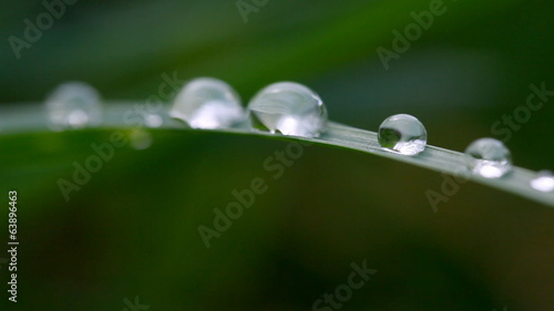 Green grass with waterdrops. Sliding camera