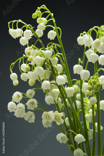 Poster Lelietje van dalen Detail of Lily of the valley flower