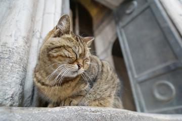 Katze auf der Schwelle