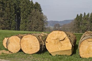 Holzreichtum