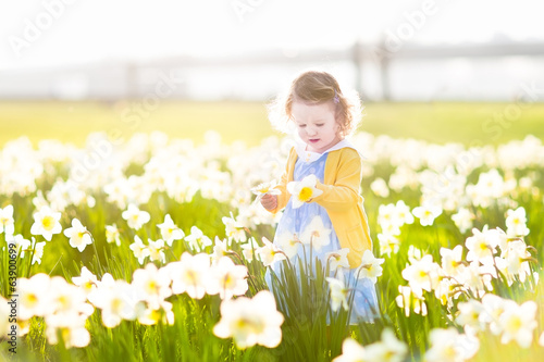 Beautiful curly toddler gi in a field of daffodils