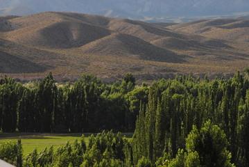 Paisaje Verde en Uspallata