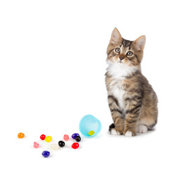 Cute tabby kitten sitting next to spilled jelly beans on white