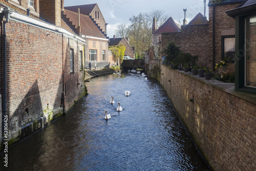 Swans on waterways, Bruges, Belgium