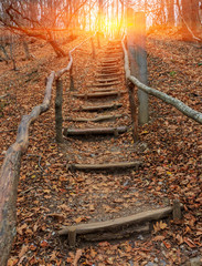 wooden stars in autumn forest