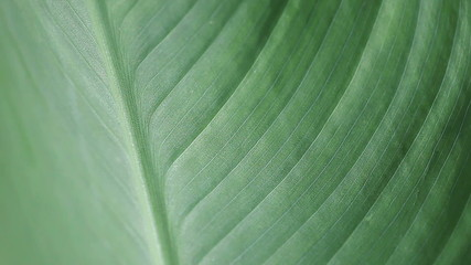 leaf texture closeup