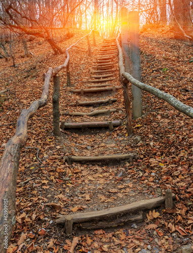 Fotobehang Trappen wooden stars in autumn forest