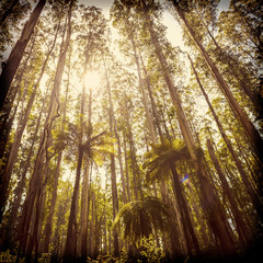 Fern Forest Filtered
