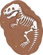 Cartoon Tyrannosaurus rex fossil - 63911289