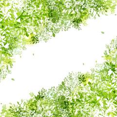 光りと緑の葉