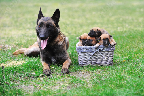 dog  with puppies