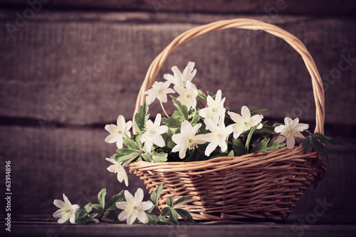 snowdrops in basket on wooden background