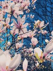 Natur / Blüten