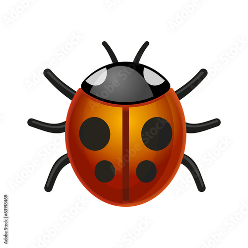 Ladybird Bug on White Background. Vector.