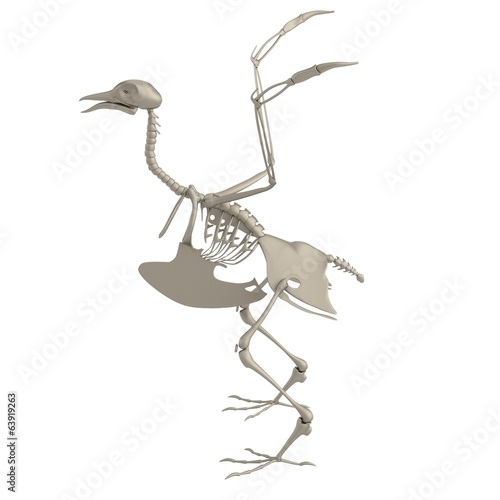 realistic 3d render of bird skeleton