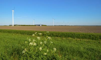 Wind turbines in a field in spring