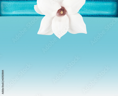 white  Magnolia flower in Bowl on Turquoise background