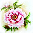 Painted watercolor card with peony flower