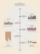 Timeline infographics design. Vector