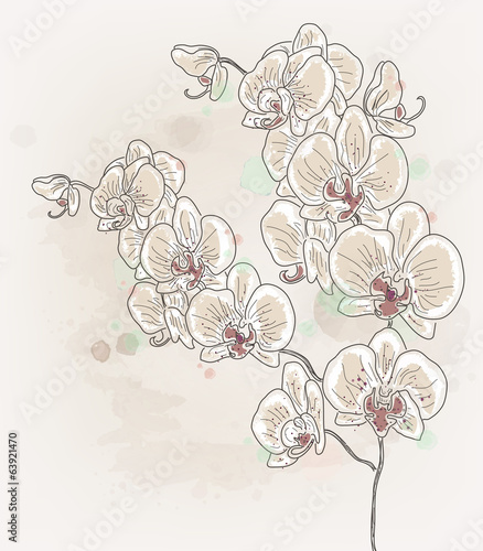 Hand drawn orchid branch