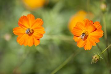 impollinazione fiori con api