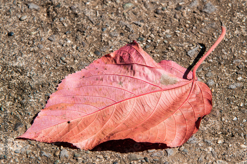 Red autumn leaf on the ground