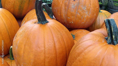Lot of autumn pumpkin.
