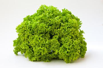 organic green lettuce, close up