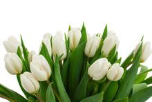 Bukiet białych tulipanów bliska