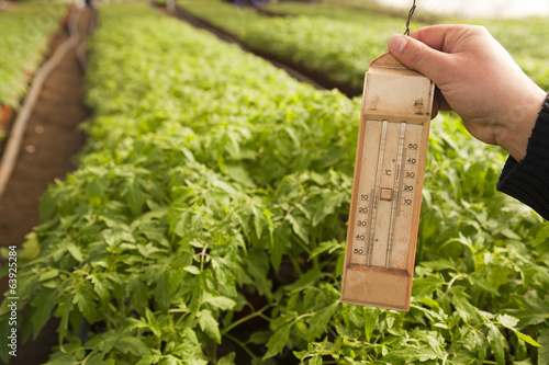 Greenhouse for vegetables - thermometer
