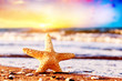Starfish on the beach at warm sunset. Travel, vacation, holidays
