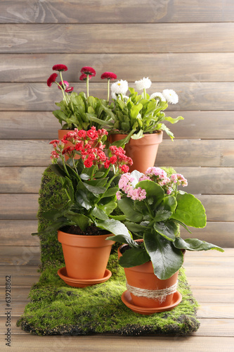 Beautiful flowers in flowerpots, on wooden background