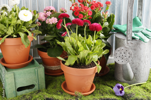 Beautiful flowers in flowerpots and gardening tools,