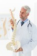 Mature male doctor holding skeleton model in his office