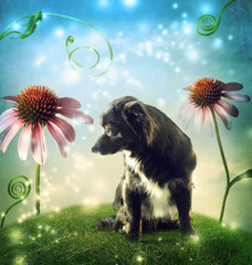 Black dog in a fantasy hilltop with echinacea flowers